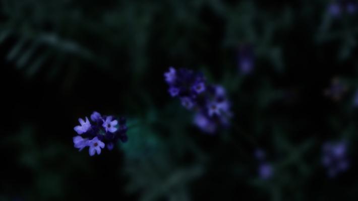 glow in the dim light #01