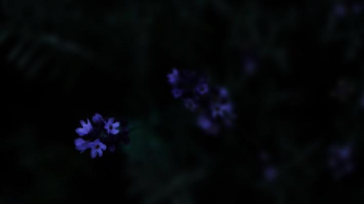 glow in the dim light #01_b1